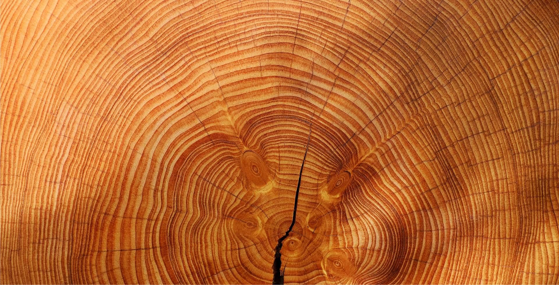 100% vero legno